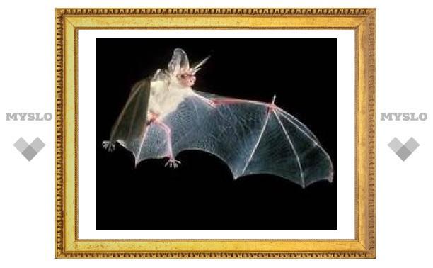 20 сентября: Международная ночь летучих мышей