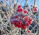 Первые заморозки в Тульскую область придут в ночь на 21 сентября