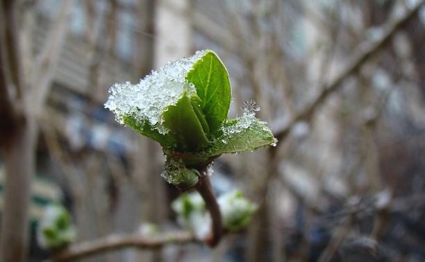 Погода в Туле 16 марта: мокрый снег, ветер и потепление