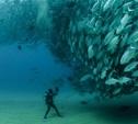 В Туле пройдет конференция «Подводное наследие»