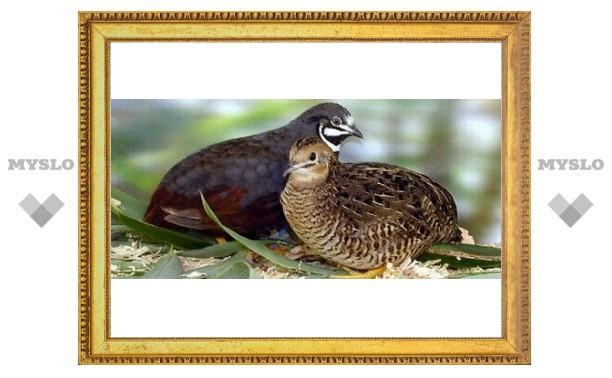 В Тулу прилетели экзотические птицы
