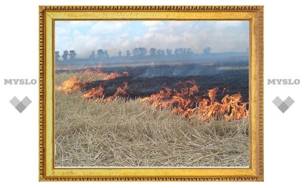 Пожары добрались до Тульской области