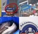 Туляки устроили панику из-за спасения несуществующих дельфинов