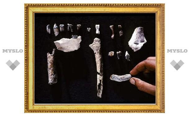 Древнейшим предком человека признали ардипитека Арди