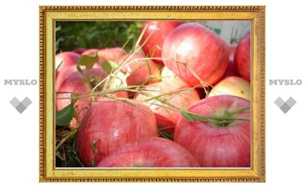 19 августа туляки празднуют Яблочный Спас
