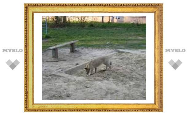 Песочница на недельку для тульских детишек