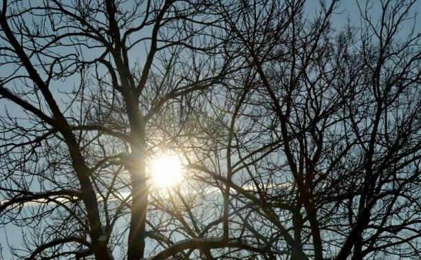 Погода в Туле 12 ноября: сухо, ветрено, до +8 градусов