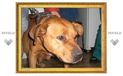 Туляки, помогите брошенной собаке!