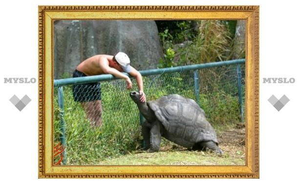 Тулякам покажут гигантскую черепаху