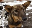 Как Тула решает проблему бездомных собак