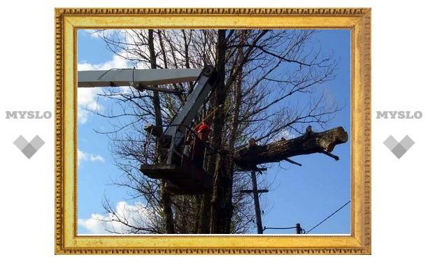 В Туле на снос деревьев выделят 25 тысяч рублей