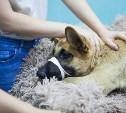 В Туле автомобилистка сбила собаку и оставила умирать