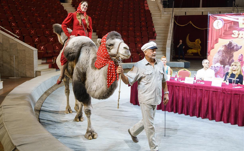 Обезьяны на пони, караван верблюдов и клоуны «Без носков»: в Туле покажут программу «Цирк зажигает огни»