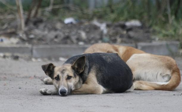 20 октября в Туле будут собирать корм для бездомных животных