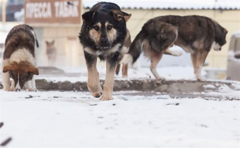 25 и 27 января в Алексине будут отлавливать бездомных собак