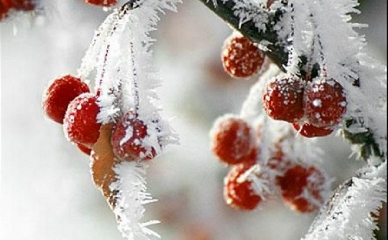 Погода в Туле 26 ноября: мороз, туман, небольшой снег