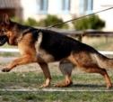 В Куркино полицейская собака помогла поймать грабителя