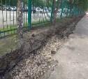 Варварское благоустройство в Туле: выживут ли деревья после такого?