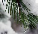 Погода в Туле 18 января: оттепель, низкое давление и сильный ветер