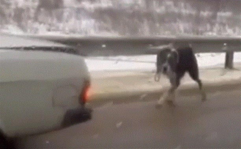 Суворовский живодер оказался хозяином собаки