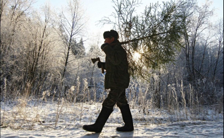 В Госдуме предложили разрешить россиянам самостоятельно рубить ёлки к Новому году