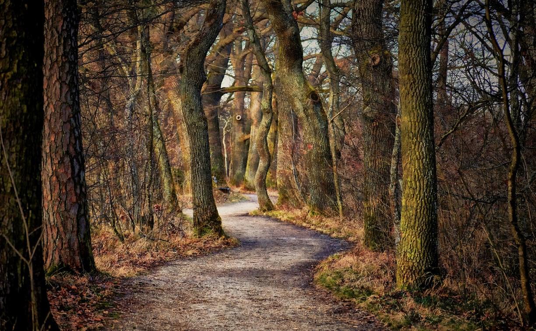 В Дубенском районе в лесу нашли труп мужчины