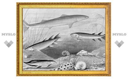 Рыба-призрак изменила представления об эволюции