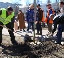 В тульском сквере высадили более 50 кленов и лип