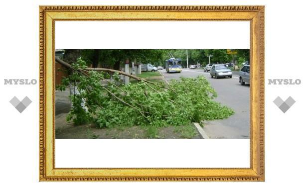 В Туле на дорогу упало дерево