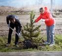 В Туле высадили 400 молодых сосен
