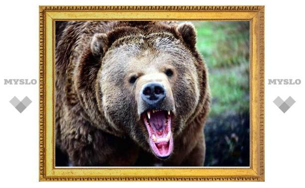 В Японии участились нападения голодных медведей на людей