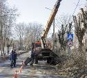 Кронирование деревьев в Туле: варварство или благоустройство?