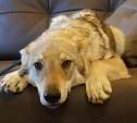 Мифы и правда: Какой сухой корм для собак соответствует нормам?