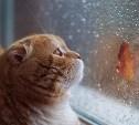 Погода в Туле 8 ноября: небольшой дождь и до 10 градусов тепла
