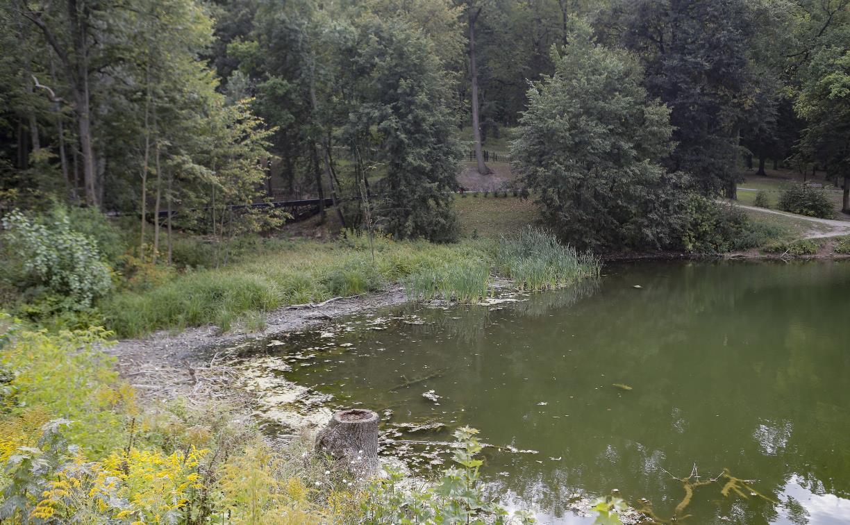 Туляки сообщают о массовой гибели уток в Платоновском парке