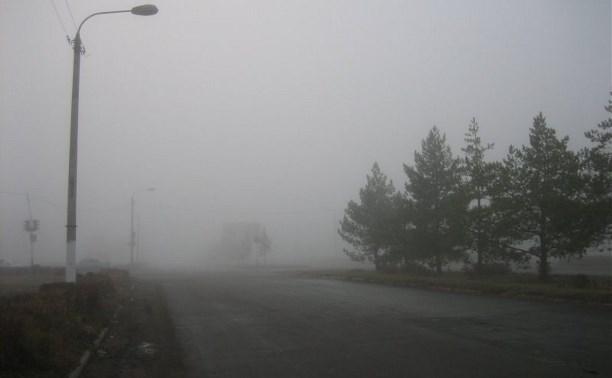 Погода в Туле 17 июля: туман, кратковременный дождь и похолодание