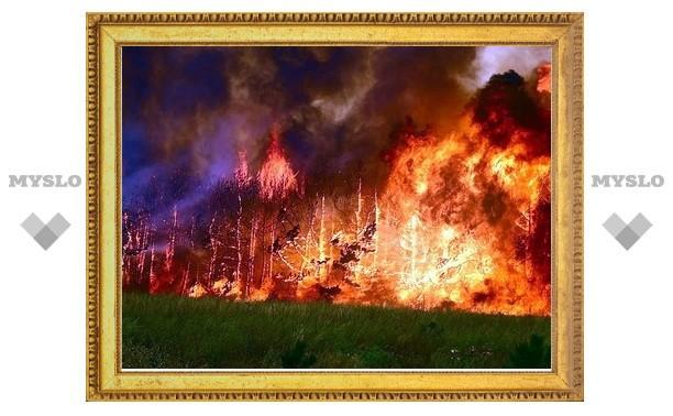 Аномальная жара в Туле привела к сотням возгораний