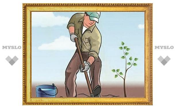 Давайте сажать деревья!