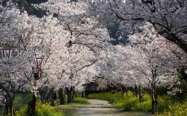 На Куликовом поле высадят яблоневую аллею