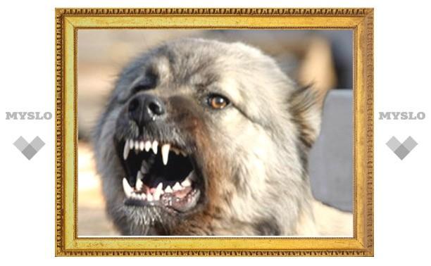 Тулячка требует полмиллиона с владельца бойцового пса