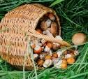 В Дубенском лесу найдено тело грибника с огнестрельным ранением