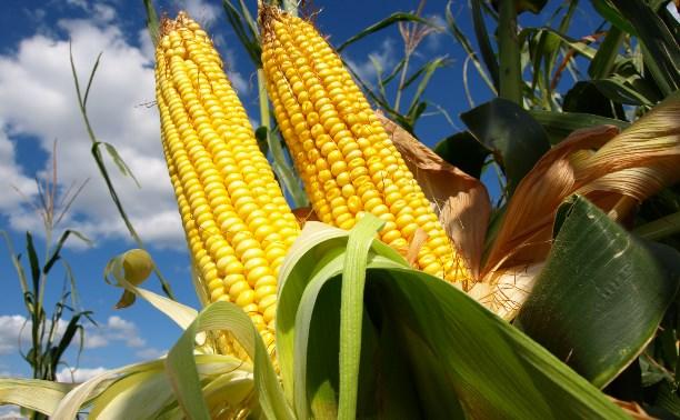 Житель Тёпло-Огарёвского района похитил 870 початков кукурузы