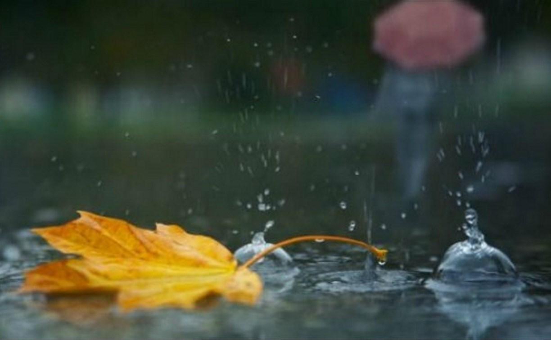 Погода в Туле 30 октября: дождливо и ветрено