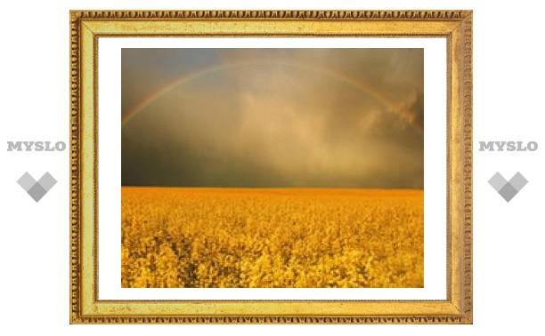 6 сентября: Дождь - к сухой осени и хорошему урожаю