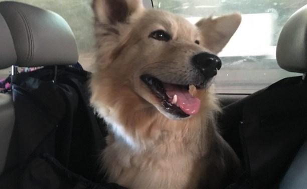 Собака убитой на Косой Горе тульской семьи уехала жить в Грузию