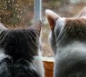 23 июля в Туле ожидаются дожди и грозы