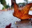 Погода в Туле 19 сентября: до +24, умеренный ветер и осадки