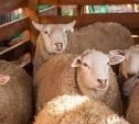 Безработный туляк украл овцу