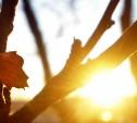 Погода в Туле 3 апреля: до +14 градусов и низкое давление
