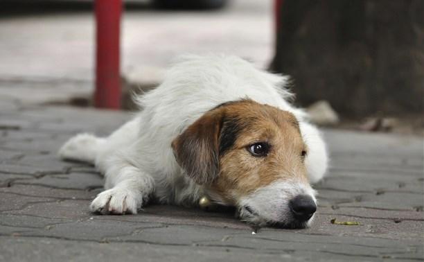 Волонтеры добиваются закрытия «веневской усыпалки» для бездомных собак